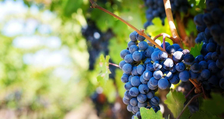 L'uso dei deumidificatori per l'appassimento dell'uva