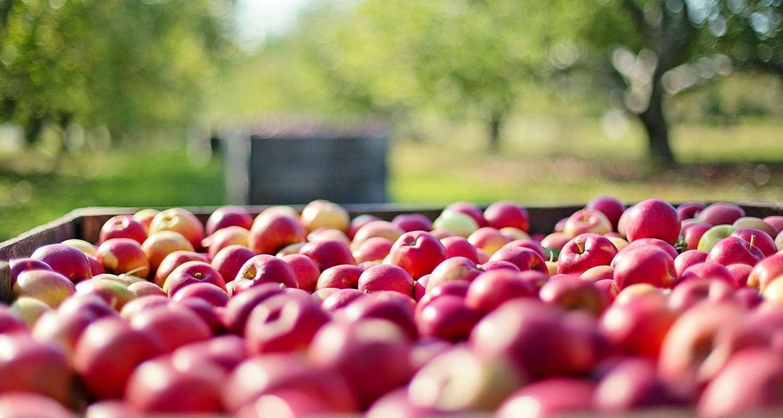 Sistemi di deumidificazione per industrie alimentari